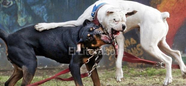 La ley de animales peligrosos rige en Córdoba desde 2009, pero no se cumple | Foto: ellitoral.com