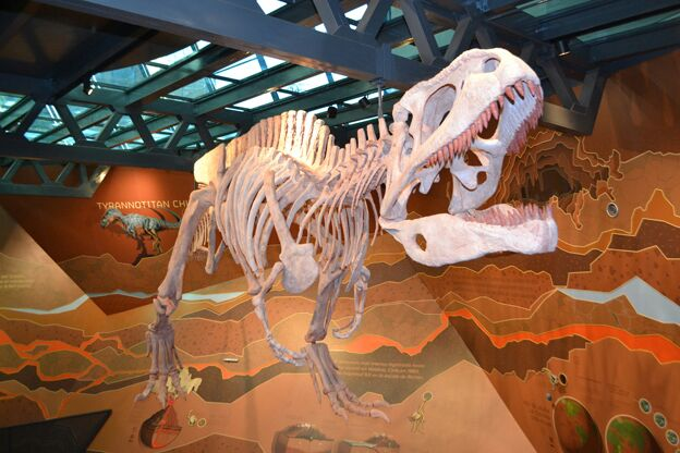 Fósiles de dinosaurios en la Plaza Cielo Tierra de Córdoba | Foto: Gobierno de Córdoba.