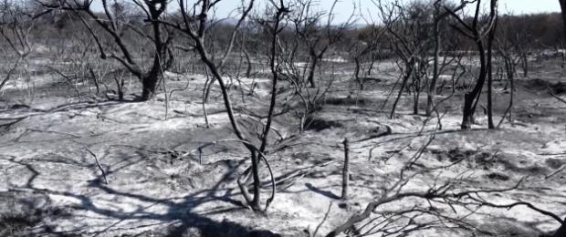 Devastadora imagen de un paraje serrano arrasado por los incendios | Crédito: Youtube - Gobierno de Córdoba.